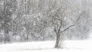 Tormenta di neve