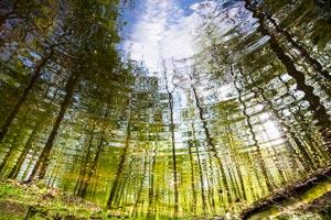 riflessi nel bosco